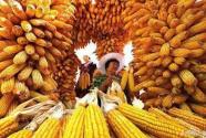 半月谈评论:让农民参与,让农民满意