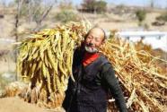 """首个中国""""农民丰收节""""来了 贝店百款农产品上架  多重活动启动"""