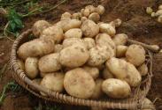 """""""土豆接力""""也是扶贫模式创新"""