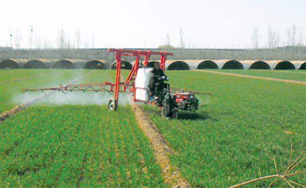 专业人员统一为小麦喷洒农药
