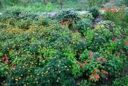 """穷山沟变身""""花果山""""——""""太行明珠""""河北前南峪的生态变迁"""