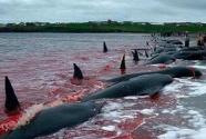 """宣布""""退群"""" 恢复商业捕鲸 日本招致多方批评"""