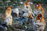 秦岭野生动物保护现状如何