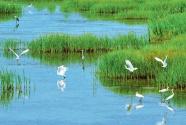 湿地保护:应对全球气候变化的自然解决方案