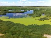 """戴源代表:我国应加快推进湿地生态?#21543;?#36951;""""零的突破"""