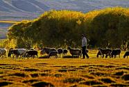 南疆夜话:我的梦想,你来实现