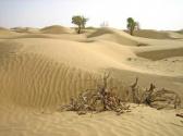 """记者手记:""""沙漠守望者""""的新乡愁与新渴望"""