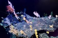 """""""科学""""号在马里亚纳海沟发现多处罕见""""海底花园"""""""