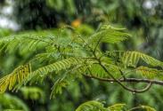 【芒种养生】雨多湿气重,养生要助阳