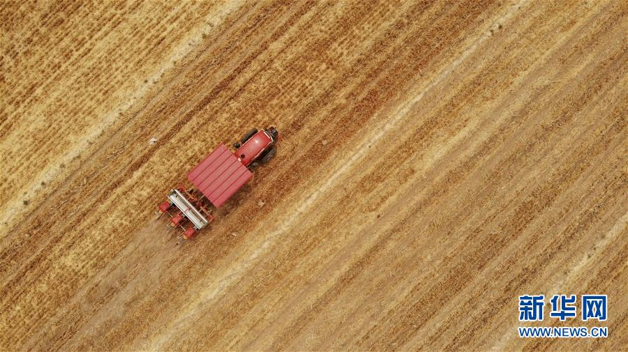 (新华全媒头条·图文互动)(7)一个传统农业县的脱贫之路——来自河北新河的调查报告