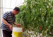 好多棚里都沒種,能對菜價有多大影響?——壽光菜農走訪記