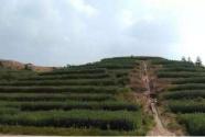 """从""""不毛地""""到""""花果山""""——江西赣州废弃稀土矿山的绿色""""蝶变"""""""