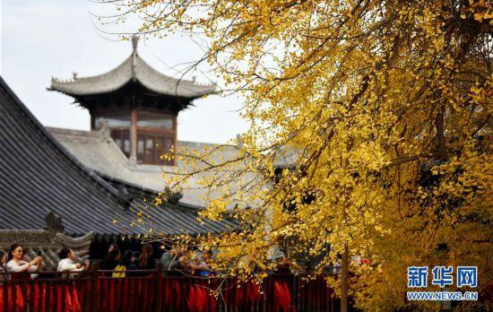 (美丽中国)(2)千年银杏立古刹 叶随风雨满地金