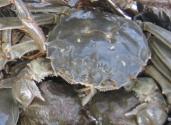 """螃蟹与人争水,""""阳澄湖困局""""如何解"""