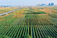 推动高质量发展 描绘壮美广西新绿野