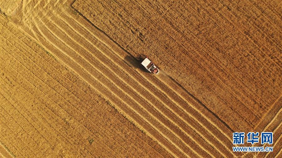 #(经济)(2)小麦收割忙