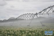 河北塞北:打造现代高效农业集群