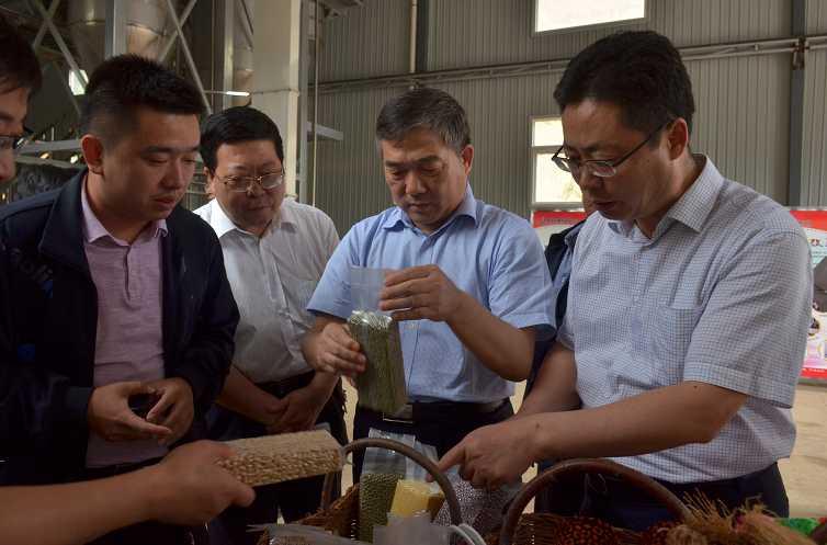 半月谈陕煤集团:让产业成为乡村振兴的强劲引擎