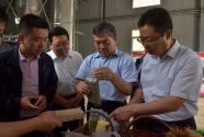 陕煤集团:让产业成为乡村振兴的强劲引擎